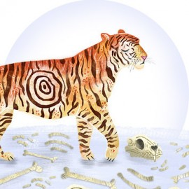 Don't target our tigers